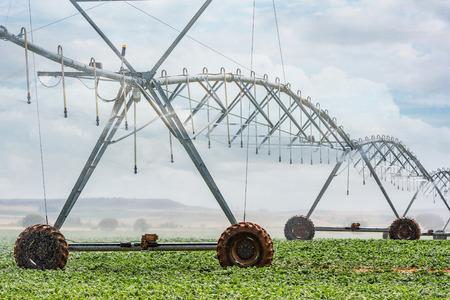 Sistema de riego de hortalizas con aspersor