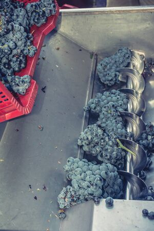 Process of crushing the grapes in winemaking
