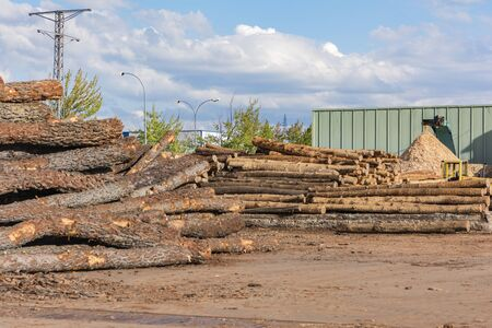 Sawmill for the treatment and processing of pine wood Standard-Bild