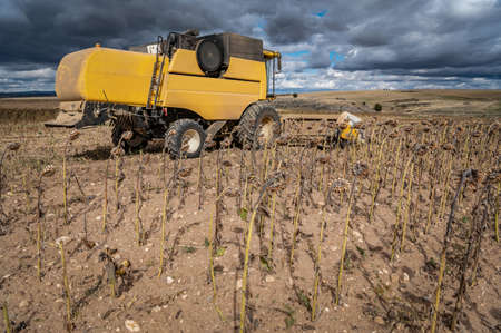 Combine harvester harvesting sunflowers in autumn for the production of biodiesel