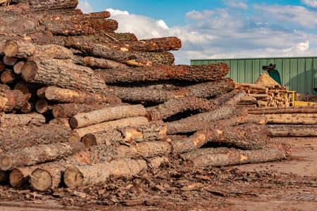 Pile of pine logs in a sawmill for further processing into pellets Imagens