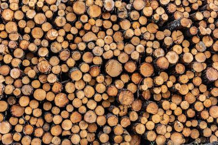 Closeup of a pile of pine logs