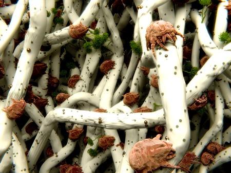 Dust mites in a mattress photo