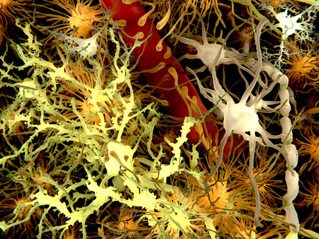 Brain cells. The main cell types of the brain: yellow: neurons; orange: astrocytes; gray: oligodendrocytes; white: microglia. Stock Photo