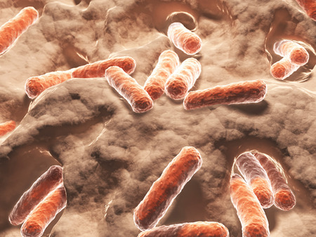박테리아, 세균