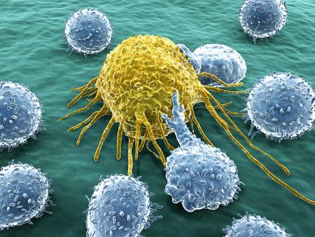Kankercel aangevallen door lymfocyten