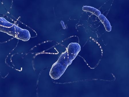 Escherichia coli bacteria photo
