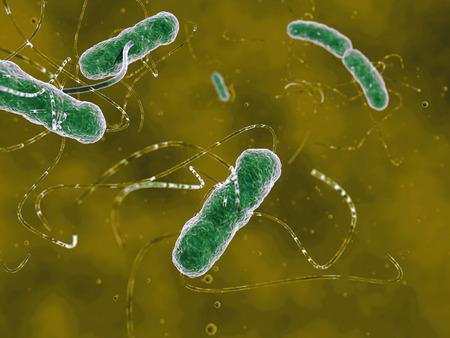 e coli: EHEC bacteria