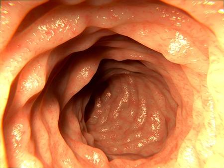 diarrea: Intestino saludable Foto de archivo