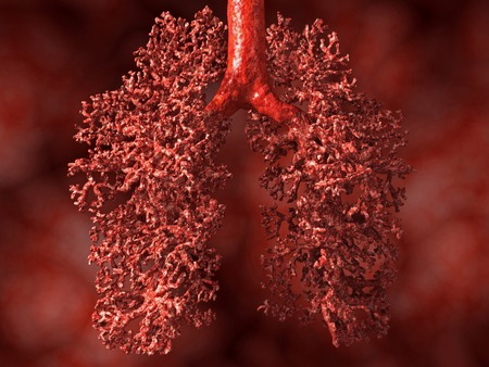 alveolos pulmonares: Pulmón humano