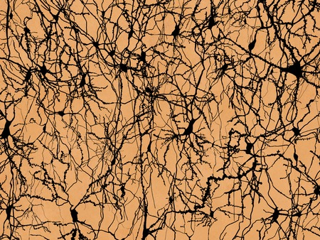Neuron Network, pyramidal neurons in Ramon y Cajal's drawing style