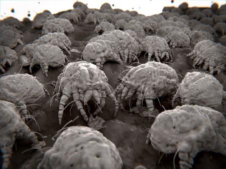 Huisstofmijt, hun uitwerpselen zijn allergische reacties bij mensen veroorzaken Stockfoto