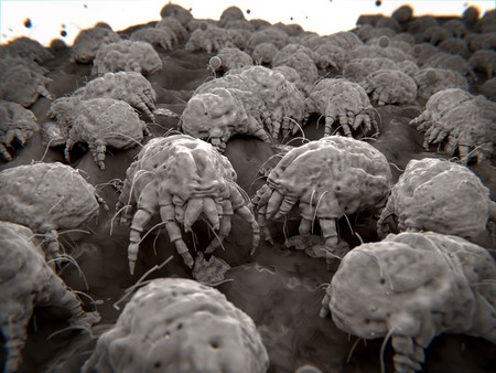Dust mites, their excretions are induce allergic reactions in humans