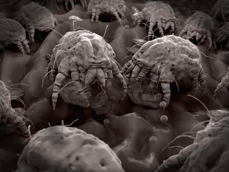 Dust mites closeup