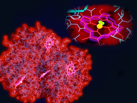 cofactor: Hemoglobin molecule, active site Stock Photo