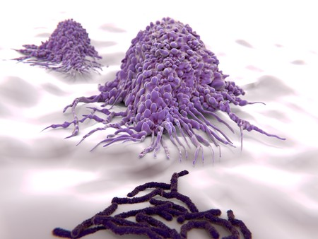 killer cells: Macrophages approaching bacteria (bacilli). Macrophages engulf and digest cellular debris and pathogens.
