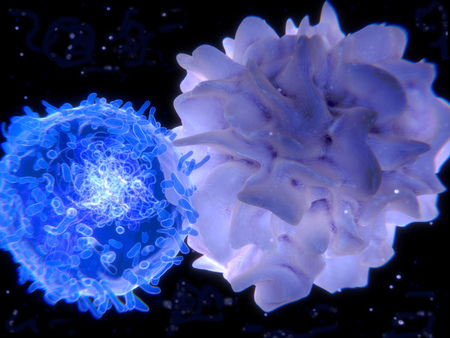 Interaction between a T-lymphocyte (left) and a dendritic cell. Stock Photo