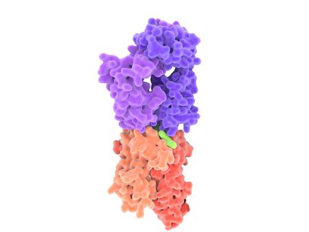 T-Zell-Rezeptor in Komplex mit dem MHC Klasse II-Peptid-Komplex. Das Antigen (hellgrün) ist ein Peptid, das von einer Tumorzelle, Bakterien oder Viren. Standard-Bild - 60596995