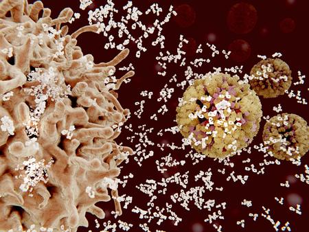 Plasma cell segregating antibodies against influenza viruses