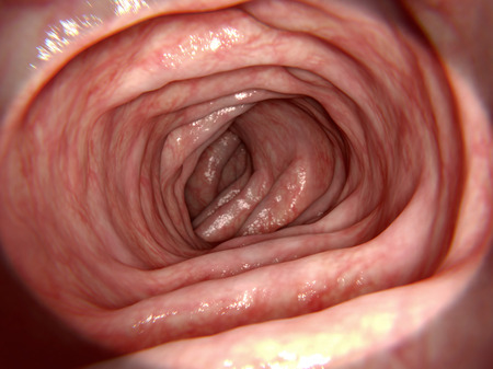 ileum: Healthy intestine