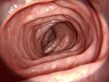 defecation: Healthy intestine