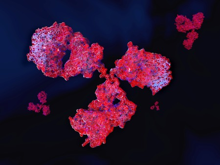 Antibody showing the antigenic binding sites.The regions where the blue lines are more visible, are the antigenic binding sites of the antibody. Stock Photo