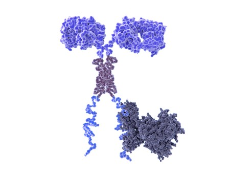 Chimeric antigen receptor CARs are engineered cell receptors that allow T cells to recognize and attack cancer cells in a specific way. Foto de archivo