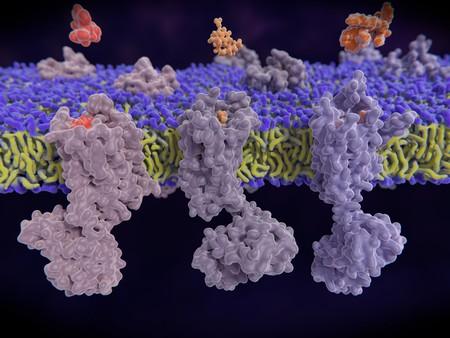 µ-, delta-, kappa-opioid receptors display a role in modulating pain perception; opioid agonists are potent analgesics. Endogenous opioids are enkephalin, dynorphin, endorphin an. 3d rendering