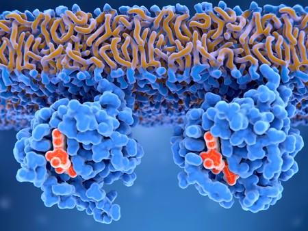 Inactive and active Ras proteins Inactive Ras protein (left) with GDP and active Ras protein (right) with GTP. Ras proteins are involved in transmitting signals within cells turning on genes involved in cell growth, differentiation and survival. Фото со стока