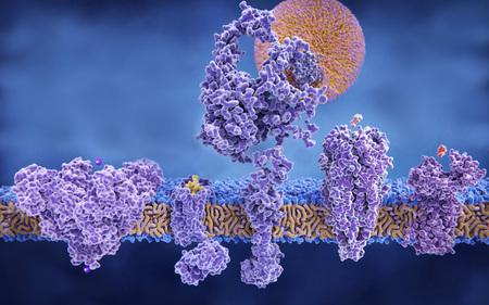 Structure variety of membrane proteins: (Illustration) für SciPho (left to right) Potassium channel, delta-opioid receptor, LDL receptor, acetylcholine receptor, histamine receptor