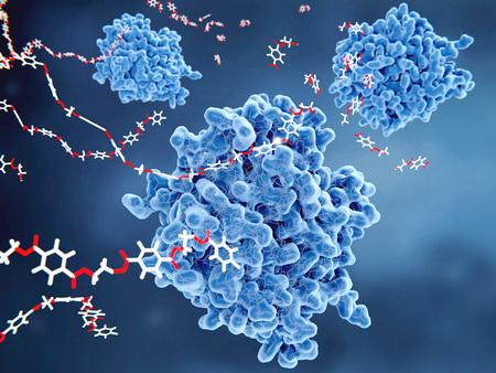 PETase is een bacterieel enzym dat PET-plastic afbreekt tot monomere moleculen. Het hele bacteriële afbraakproces levert tereftaalzuur en ethyleenglycol op, die onschadelijk zijn voor het milieu. Stockfoto