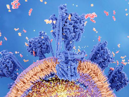 Illustration 3D de la synthèse d'ATP dans une mitochondrie. L'ATP synthase couple la synthèse de l'ATP (rouge) à partir de l'ADP et du phosphate inorganique (orange) à un gradient de protons (points lumineux) créé à travers la membrane mitochondriale pendant la respiration cellulaire.