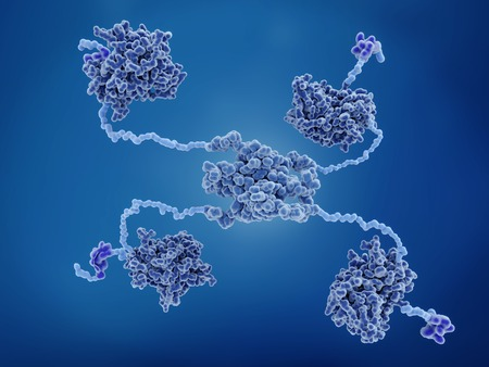 The p53 tumor suppressor. p53 prevents cancer formation and acts as a guardian of the genome. Mutations in the p53 gene contribute to about half of the cases of human cancer. Structure: 4 DNA binding domains (dark blue), 4 transactivation domains (bluish violet), flexible arms (light blue), tetramerization domain (center).