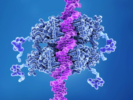 p53 tumor suppressor bound to DNA. p53 prevents cancer formation and acts as a guardian of the genome. Mutations in the p53 gene contribute to about half of the cases of human cancer. Structure: 4 DNA binding domains (dark blue), 4 transactivation domains (bluish violet), flexible arms (light blue), tetramerization domain (center). Фото со стока