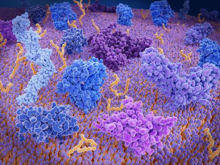 Immunologisch aktive Proteine auf einer T-Zelle. TCR (blau), CD-4 (hellblau), CD-28 (dunkelblau), PD-1 (magenta), CTLA-4 (violett), Ca-Kanal (dunkelviolett). Die T-Zell-Rezeptoren CD-4 und CD-28 aktivieren T-Zellen, während PD-1 und CTLA-4 die Aktivierung von T-Zellen hemmen.