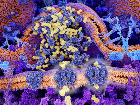 Chimeric antigen receptors (light blue) on the surface of a T-lymphocyte bind specifically to CD19-antigen molecules (magenta) on a leukemia cell. This activates a signal cascade in the T-cell leading to the segregation of vesicles that contain perforin a Редакционное