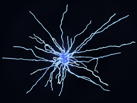 Fibrous astrocytes are found in the white matter of the nervous system.