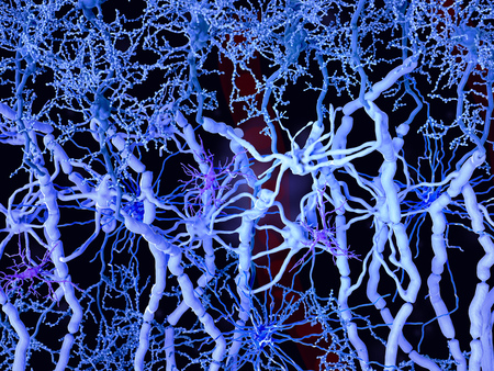 White matter is made up of myelinated axons. Oligodendrocytes form the myelin sheaths around the axons. Fibrous astrocytes (dark blue) supporting the oligodendrocytes and the neurons. Microglia cells (violet) are primarily as immune cells.