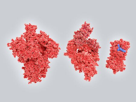 From left to right.: spike protein, RNA polymerase, main protease. This proteins are the main targets for .drugs against COVID-19.. PDB entries: 6vsb, 7btf, 6lu7.