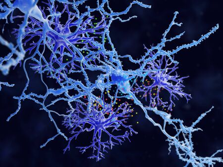 Protoplasmic astrocytes (violet) play an active role in neuronal communication through synapses and regulation of neural circuit functions, memory and learning.