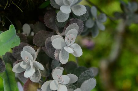leaves closeup, details, backgrounds of natural plants