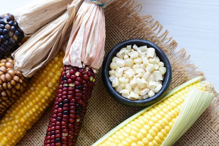 (Zea mays) Whole and shelled dry multi-colored corn with dry leaves on wooden