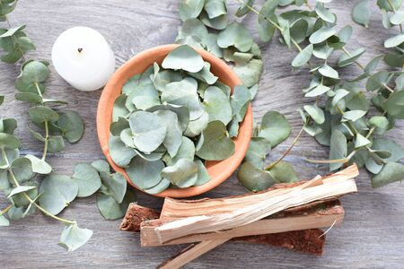 Eucalyptus or Eucalyptus (Eucalyptus) green dry leaves in corsage and loose on light background