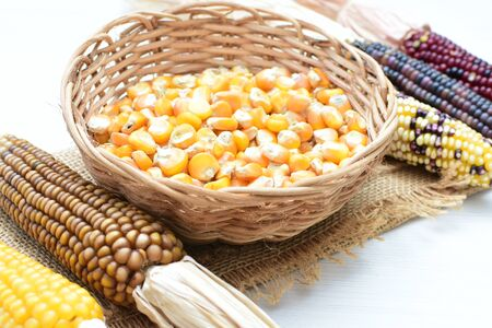 Corn - corn - Zea mays whole and shelled cob of white and yellow corn displayed in containers 写真素材 - 143295594
