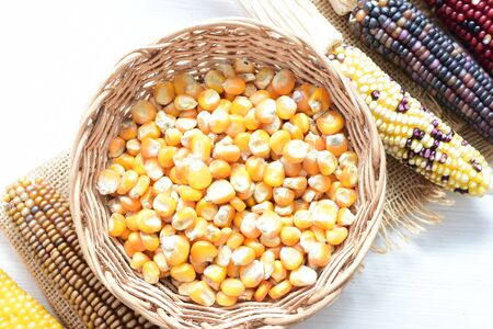 Corn - corn - Zea mays whole and shelled cob of white and yellow corn displayed in containers 写真素材 - 143295595