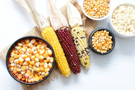 Corn - corn - Zea mays whole and shelled cob of white and yellow corn displayed in containers