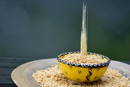 Avena sativa - Raw and natural watered grain oats, displayed in containers, flat bottom