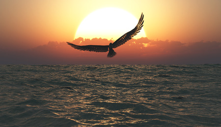 Eagle flying in the clouds at dawn Standard-Bild