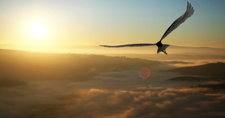 Eagle flying in the clouds at dawn Stock Photo