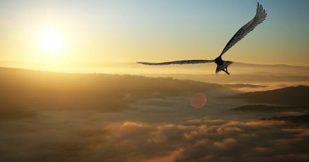 aguila volando: Águila volando en las nubes al amanecer